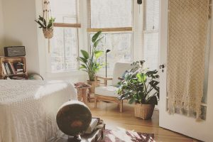 Cum alegem plantele în funcție de cameră